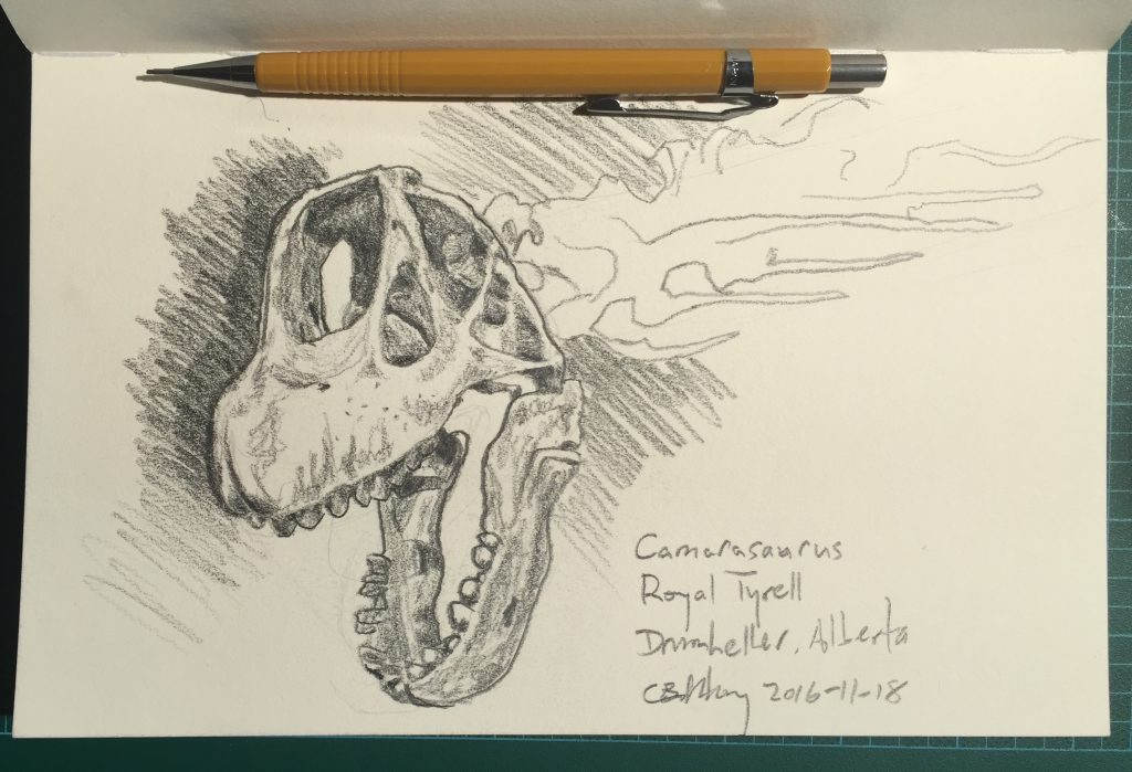 Drawing of a Camarasaurus skull at the Royal Tyrrell Museum in Drumheller, Alberta
